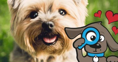 ▷ Dierenverzekering Vergelijken? Goedkope huisdierenverzekering